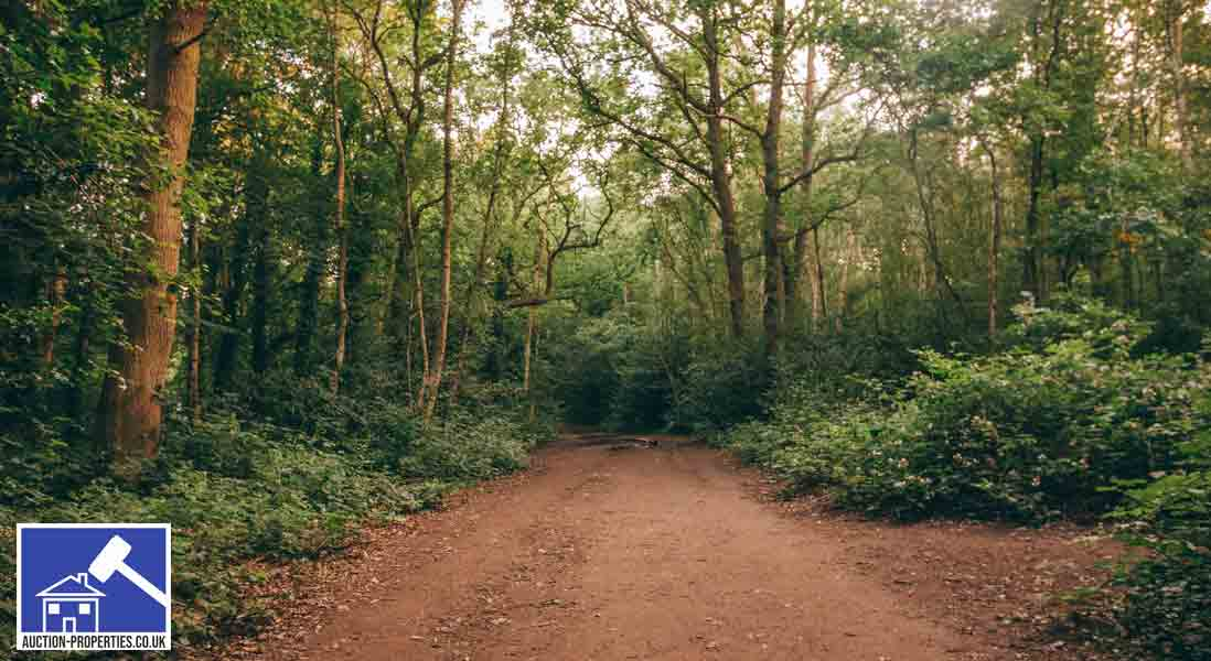 Image showing wooded land for sale in the UK
